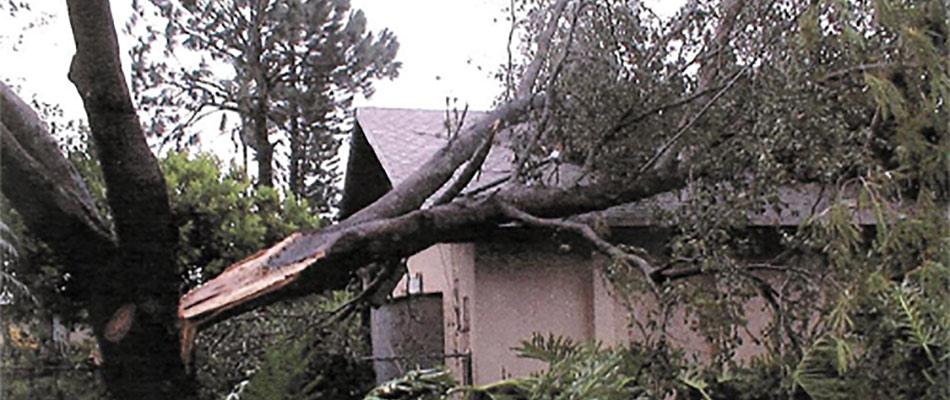 Untrimmed trees pose safety hazards, like this tree that has fallen into a home in Fort Myers, FL.