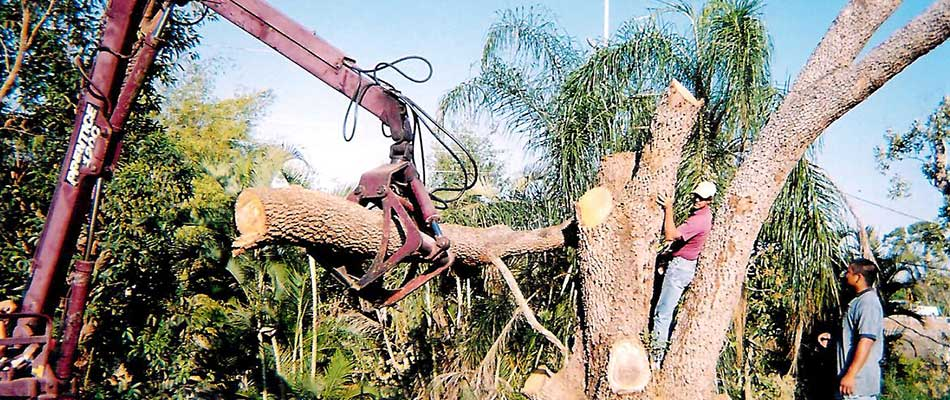 Our company performs tree removal services throughout the Fort Myers, FL area.