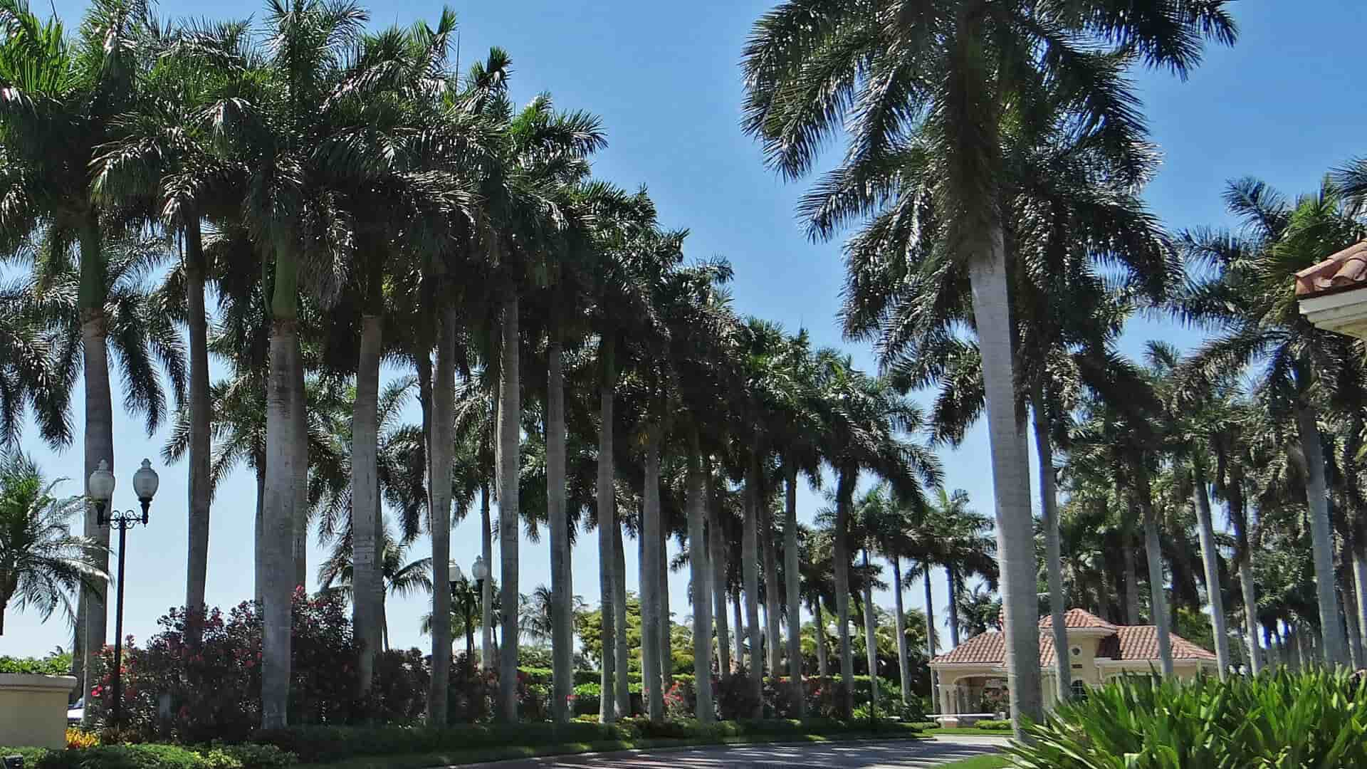 Tree Services In Cape Coral, FL.