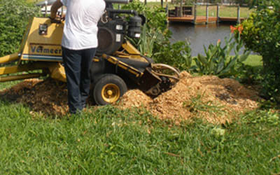 Tree stump grinding on canal in Cape Coral, FL