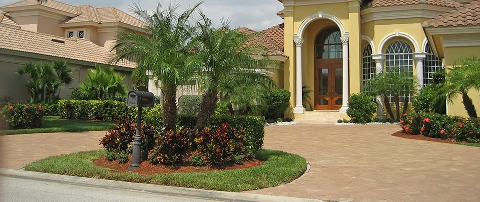 Tips for Preparing Palm Trees for Cooler Weather