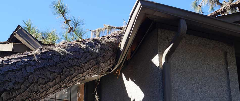 Roof damage from a falling tree in Cape Coral, Florida.