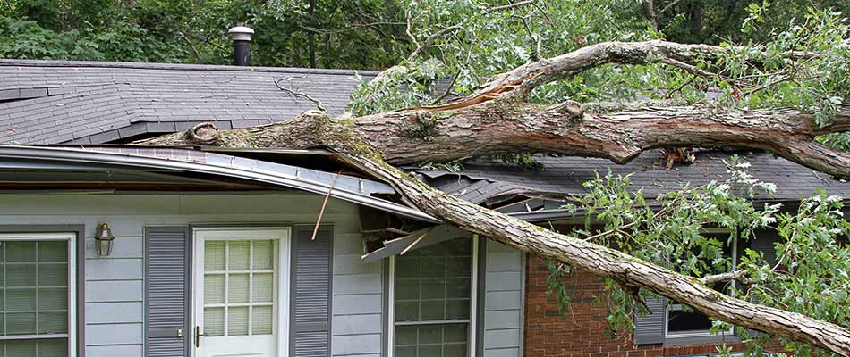 Does Homeowners Insurance Cover Tree Damage?