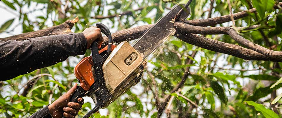 Arborist vs. Tree Surgeon