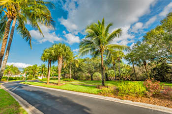 Professionally trimmed palm trees in Fort Myers, FL.