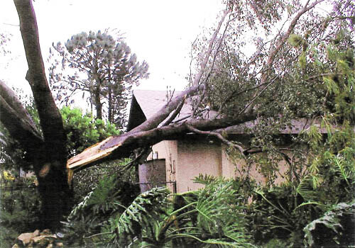 Tree Removal Services In Cape C Fort Myers And Lee County Fl