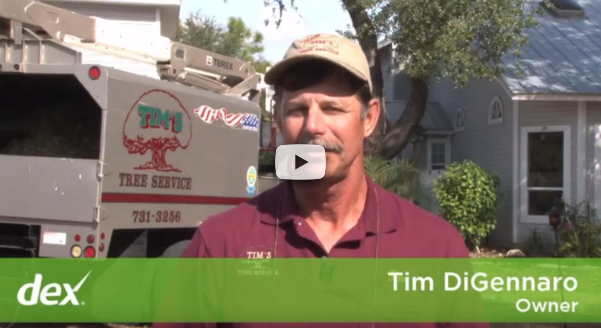Watch our video about our tree services.